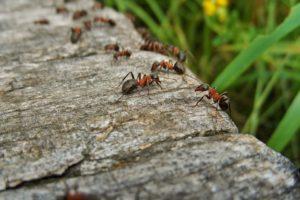 Bester Ameisenkoder 2019 Vergleich 5 Gute Ameisenkoder