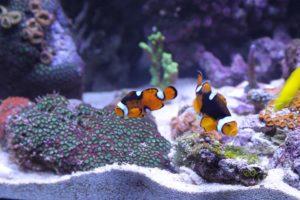 aquarium-boden-fluter