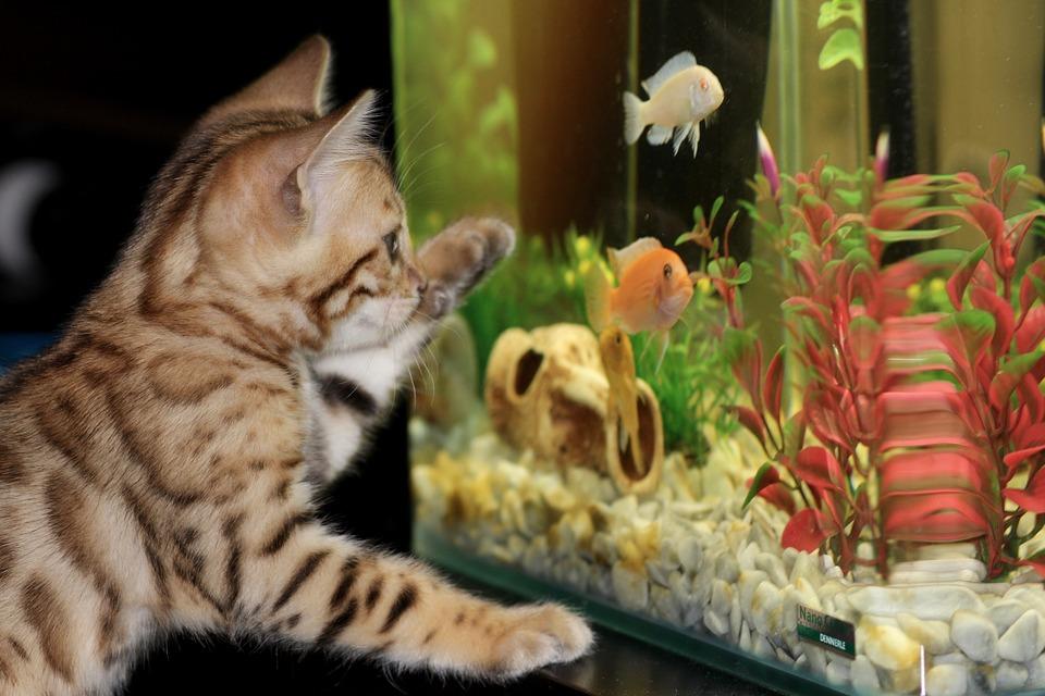 aquarium-bodenheizung