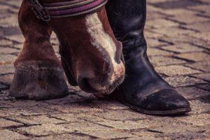 Maukesalbe beim Pferd