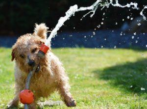 Hund-garten-zaun