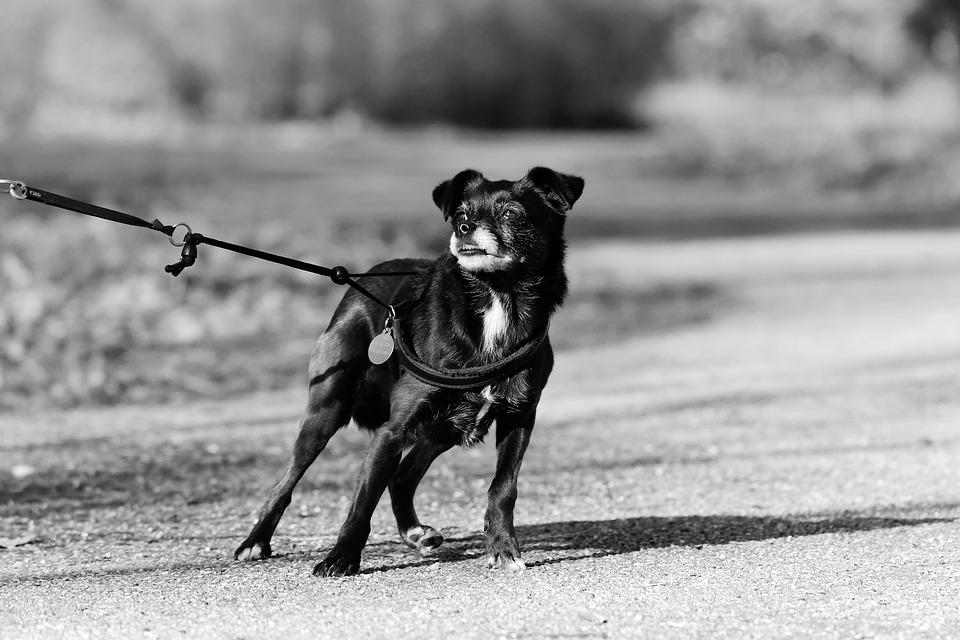 hund-zaun-draussen