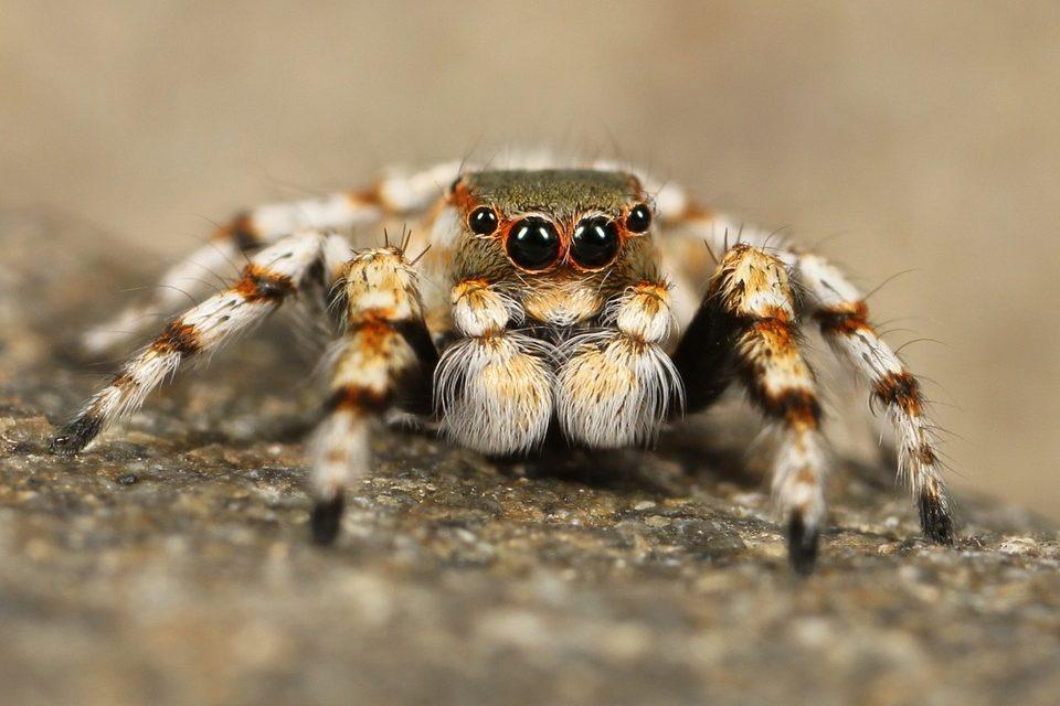 insektenspray-gegen-spinnen