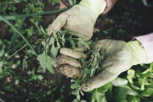 Gartenfräse