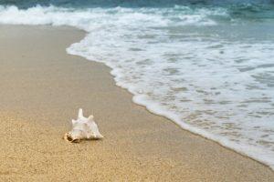 Strand mit einer Muschel